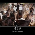 429_too_many_requests